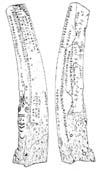 Камень Д. Г. Мессершмидта, стоявший на реке Уйбат в Хакасии. Ныне хранится в Минусинском музее. По воспроизведению финской экспедиции И. Р. Аспелина 1887-1889 годов.