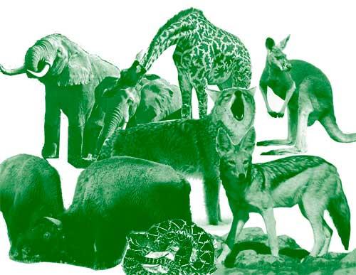 Эти животные будут жить в тувинском зоопарке