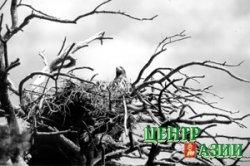 Жемчужину Тувы – на огранку
