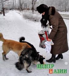 Собачья проблема