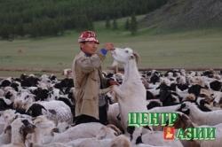 ОТРЕЗАТЬ СКОТОКРАДАМ РУКИ? Реально ли всем миром одолеть главное преступление Тувы – скотокрадство