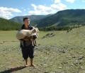 Тувинских фермеров подталкивают к кооперации – с помощью субсидий