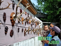 Тоджинская кунсткамера: аномальные рога