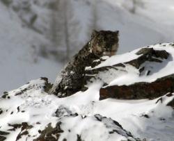 Тува – земля снежного барса