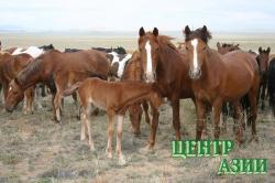 Конь или конина: можно ли лакомиться своим другом?