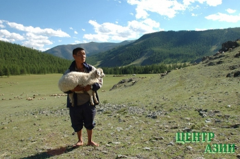 Загадка тувинской овцы