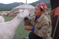 Ещё 47 начинающих фермеров Тувы получат государственную поддержку